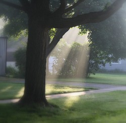 Early morning sun breaking thru the fog