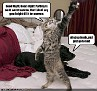 Thespian cat