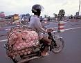 pigs on bike
