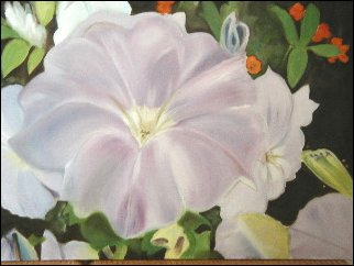 South Hampton bloom,  flower box