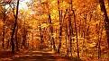 autumn-wallpaper-1920x1080-020