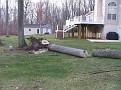 Tree Cut (1)