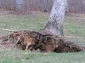 Tree Down (10)