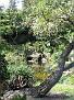 Morikami Japanese Gardens05