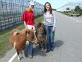 Girls, with the Shetland small ponys