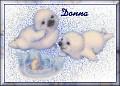 Baby Seals1Donna