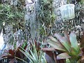 016. many Tillandsia from all over. All named with locations !!