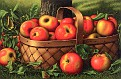 Apples in a Basket [undated]