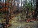 Flood 017