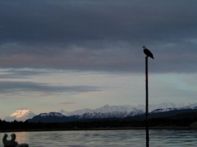 Salmon River sentinel