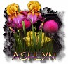 Ashlyn - 3094