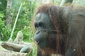 Really face to face with this orangutan