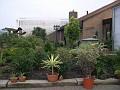 "A big Euphorbia balsamifera, and the name of our house ""CORINE"""