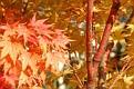 20081018 - NY Botanical Gardens - 19-sm