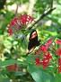 Butterfly World Butterflies Close Up02