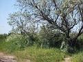 Bird Bredene 20120527 002