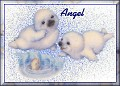 Baby Seals1Angel